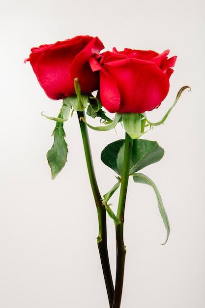 Вид сбоку розы красного цвета на белом фоне Бесплатные Фотографии