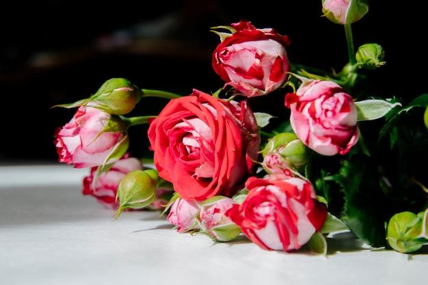 Вид сбоку красных роз с бутонами и зелеными листьями на белом фоне Бесплатные Фотографии