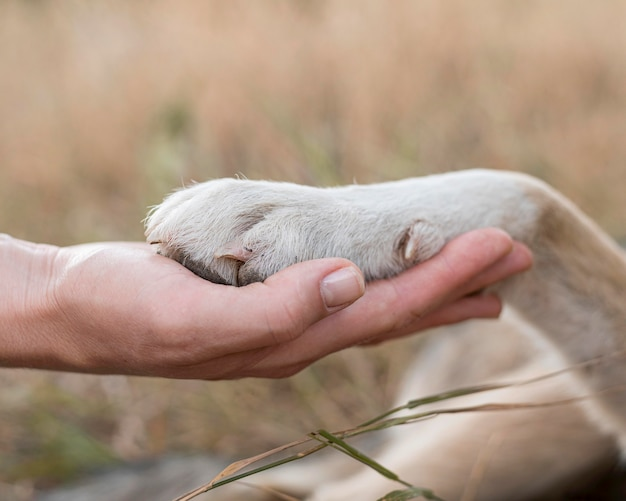 Side view of person holding dog's paw Free Photo