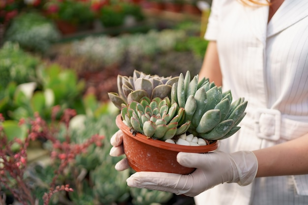 Vista laterale alle mani di donna che indossano guanti di gomma e vestiti bianchi che tengono piante grasse o cactus in vaso con altre piante verdi Foto Gratuite