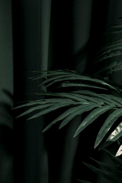 Sideways palm tree leaves next to curtain Free Photo