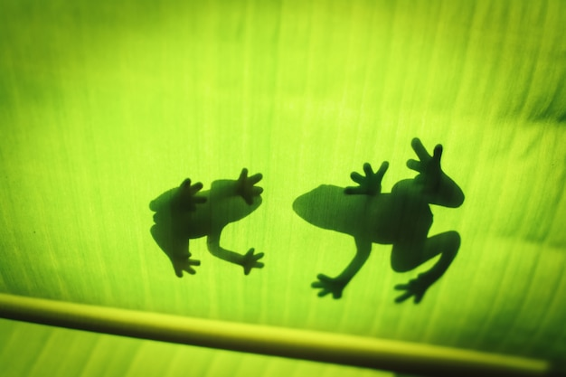 The silhouette of the animal on the leaf. Premium Photo