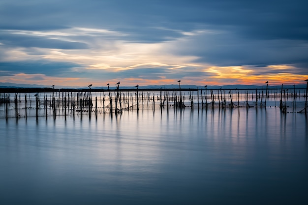 Silhouette of birds standing on poles at dusk in the albufera in valencia. long exposure. Premium Photo