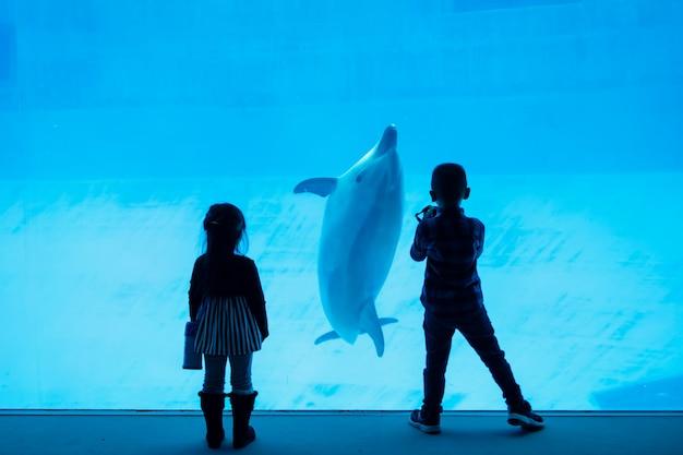 Silhouette children watching dolphin in aquarium Premium Photo