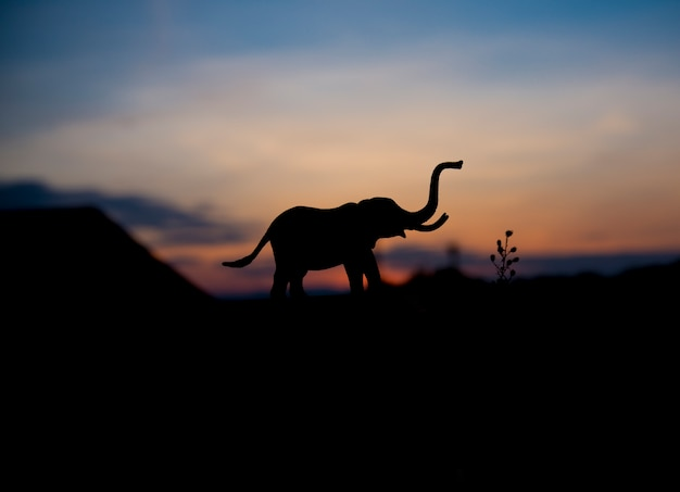 Silhouette of elephant animal at sunset background. Premium Photo