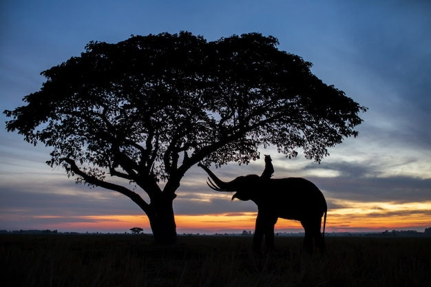 Silhouette of elephants in thailand during sunrise time Premium Photo