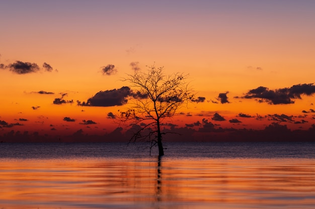 Silhouette of lonely mangrove tree in lake with twilight light in morning at pakpra, phatthalung, thailand Premium Photo