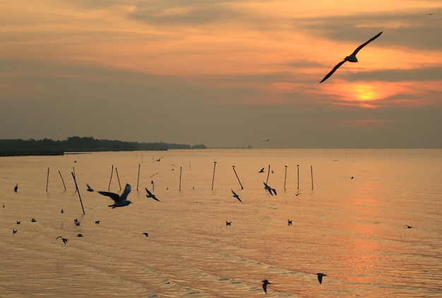 Silhouette of many seagulls flying over the sea at dawn, gulf of thailand Premium Photo