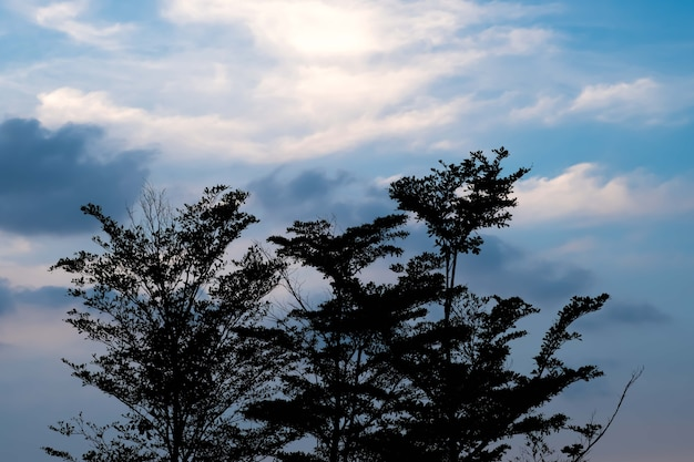 Силуэт дерева с закатом позади Premium Фотографии