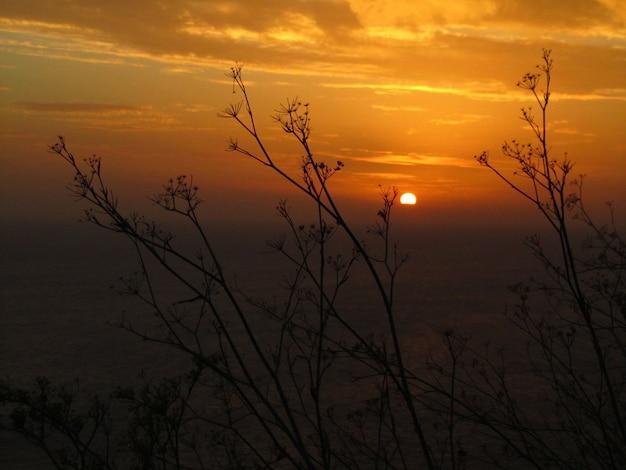 マルタのディングリクリフで日没時のフェンネル植物のシルエット 無料写真