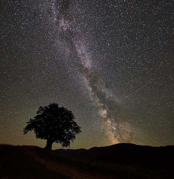 멋진 별이 빛나는 밤하늘과 산에서 은하수 아래 외로운 높은 나무의 실루엣 프리미엄 사진