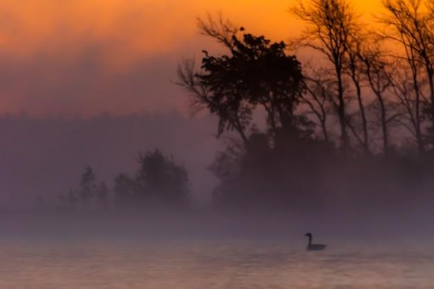 Силуэт восхода солнца вокруг деревьев на полуострове мичиган Бесплатные Фотографии