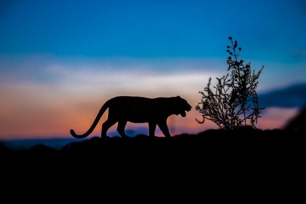 日没の背景で虎の動物のシルエット。 Premium写真
