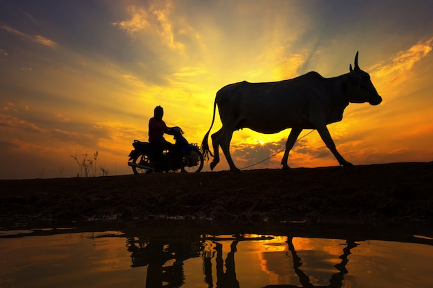 Silhouette sunset with lifestyle countryside Premium Photo