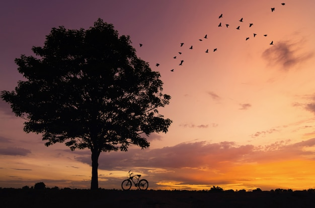 Silhouette tree and bike Premium Photo