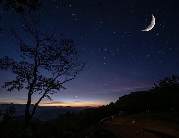クロワッサン月と早朝の日光が少ない多くの星に対して山の視点の上にシルエットツリー、自然観光の概念の風景を見る Premium写真