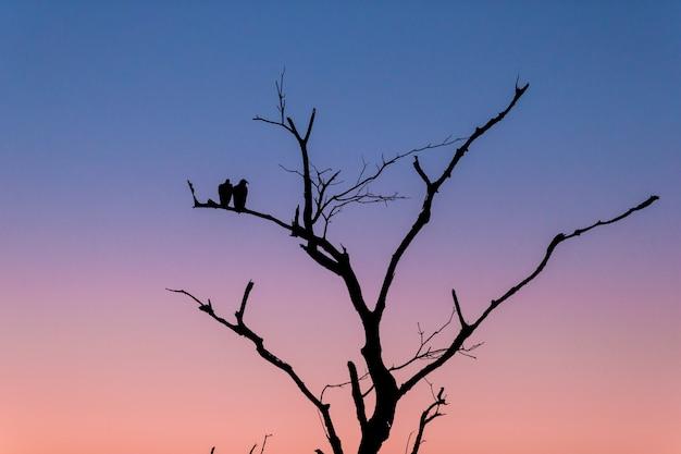 Sagoma di un albero con due uccelli in piedi sul ramo durante il tramonto la sera Foto Gratuite