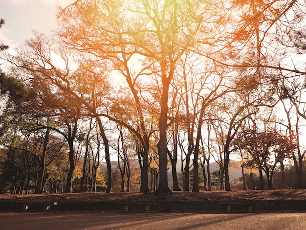 Silhouette trees in the autumn forest Premium Photo