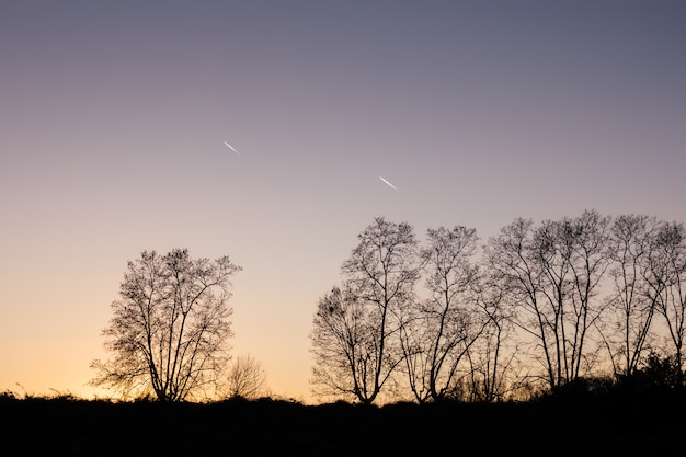 Silhouette of trees at sunset Premium Photo