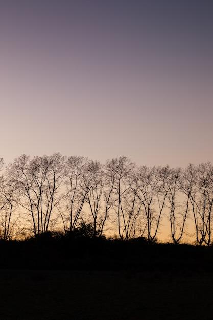 Silhouette of trees at sunset Premium Photo