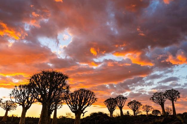Silhouette взгляд леса деревьев колчана с сценой неба ...