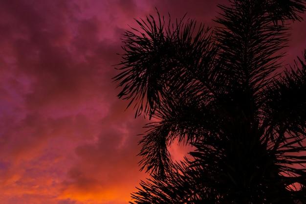 Силуэт пальмы на фоне необычного огненно-красного тропического заката. Premium Фотографии