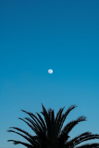 Силуэт пальмы и полная луна на голубом небе Premium Фотографии