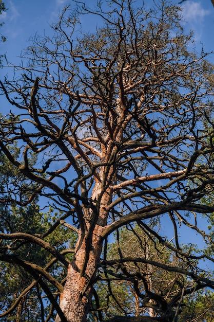 白い背景に葉のない黒い木のシルエット、木の枝のネガティブ写真 Premium写真