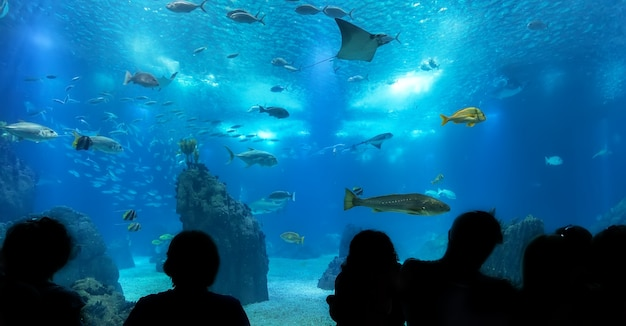 pittsburgh zoo and ppg aquarium pittsburgh graduation party planner