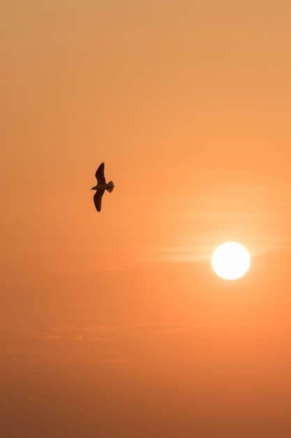 Silhouettes of seagulls flying in the sunset. Premium Photo