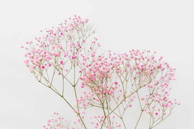 Simple pink flower twigs Free Photo