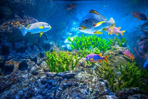 Singapore aquarium Premium Photo