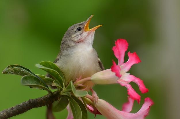 Premium Photo | Singing bird