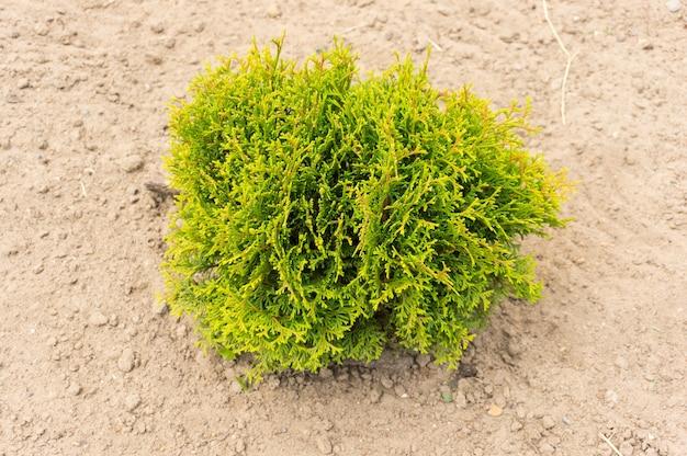 Unico cespuglio verde su terreno sabbioso durante il giorno Foto Gratuite
