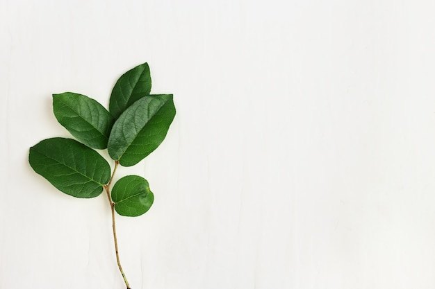 Single green twig with beautiful leaves, minimalistic natural eco concept Premium Photo