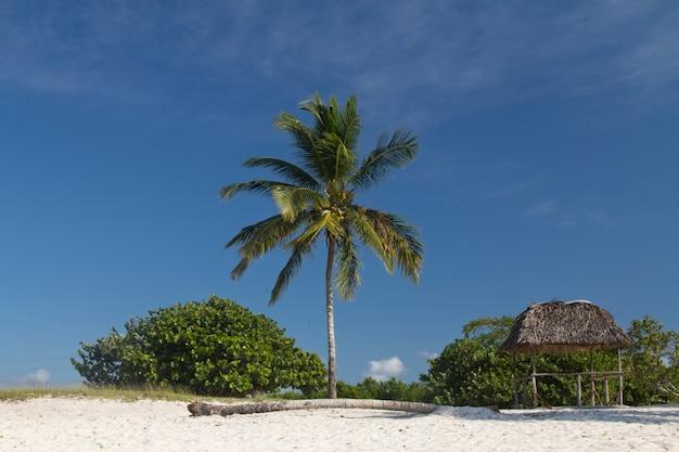 Single palm tree on beach landscape Premium Photo
