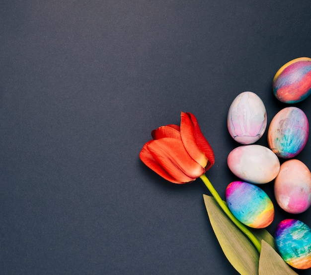 Single red tulip with painted colorful easter eggs on black background Free Photo