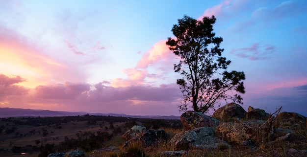 Single tree in a desert with a beautiful cloudy sky  at sunset Free Photo