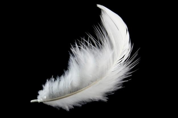 Single white feather isolated on black background. Premium Photo