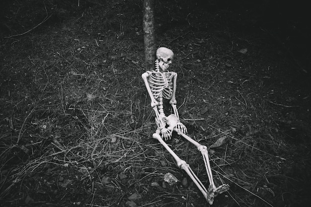 Sitting skeleton leaned on tree in dark forest Free Photo