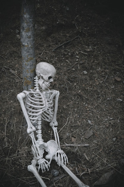 Sitting skeleton leaned on tree in forest Free Photo