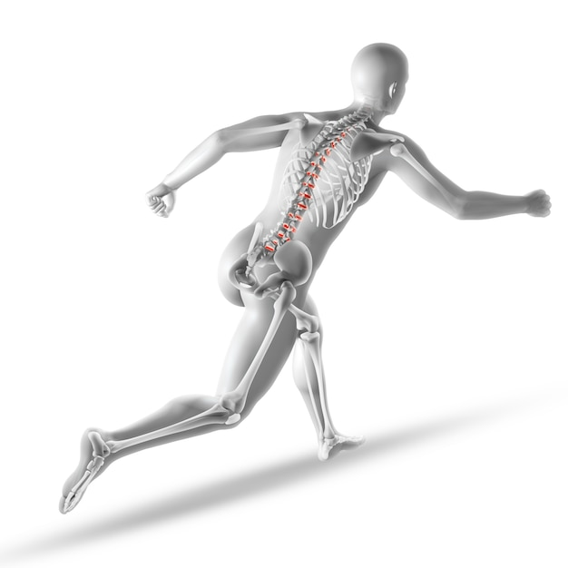 Skeleton anatomy Free Photo