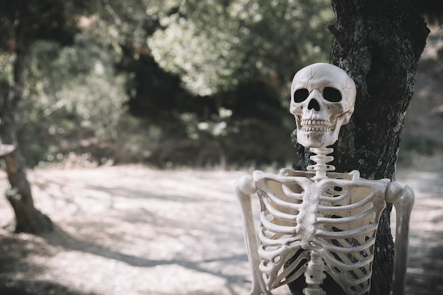 Skeleton leaned on tree in park Free Photo