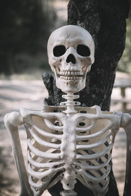 Skeleton leaned on tree Free Photo