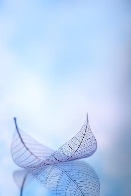 Blured背景にスケルトンの葉、クローズアップ Premium写真