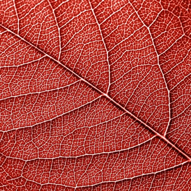 自然の葉の骨格、葉脈のある葉のパターン。カラーリビングコーラルであなたのアイデアの創造的な背景。上面図 Premium写真