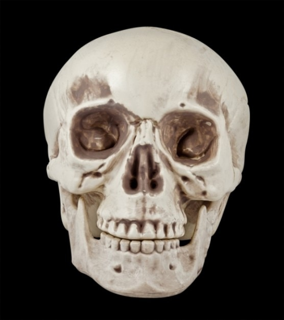 Skull prop   psd file Free Photo