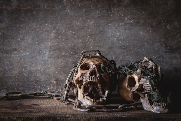 Skull with chain in still life photography Premium Photo