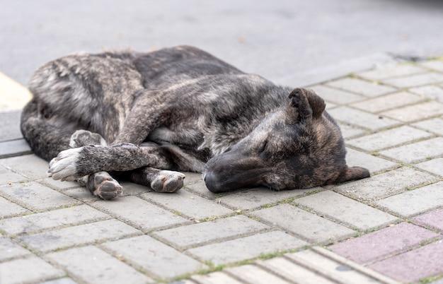 Sleeping abandoned dog in a street Premium Photo