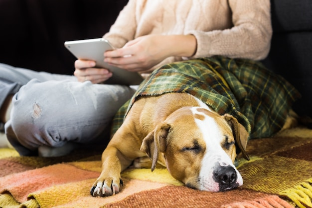 Sleeping dog with reading human Premium Photo